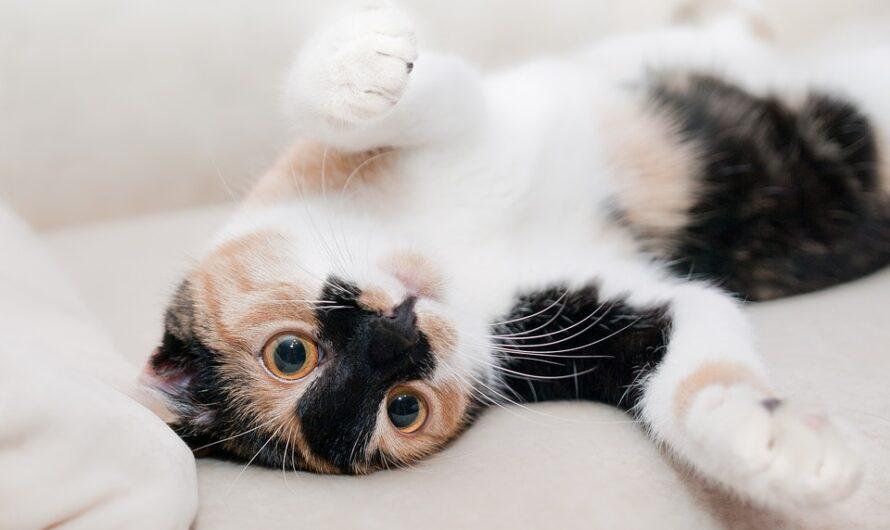 Online forhandler af kornfri kattemad og hundegodbidder i høj kvalitet